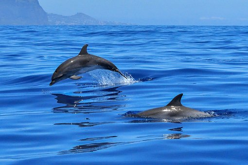 dolphins-in-torbay