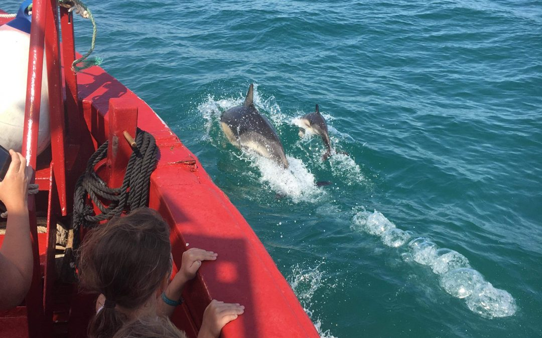 Cruises on the Blue Sea – Torquay Boat Trips